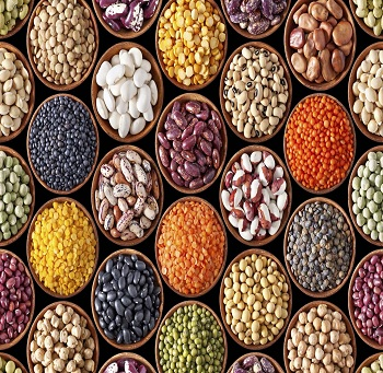 Fine Pulses export from India
